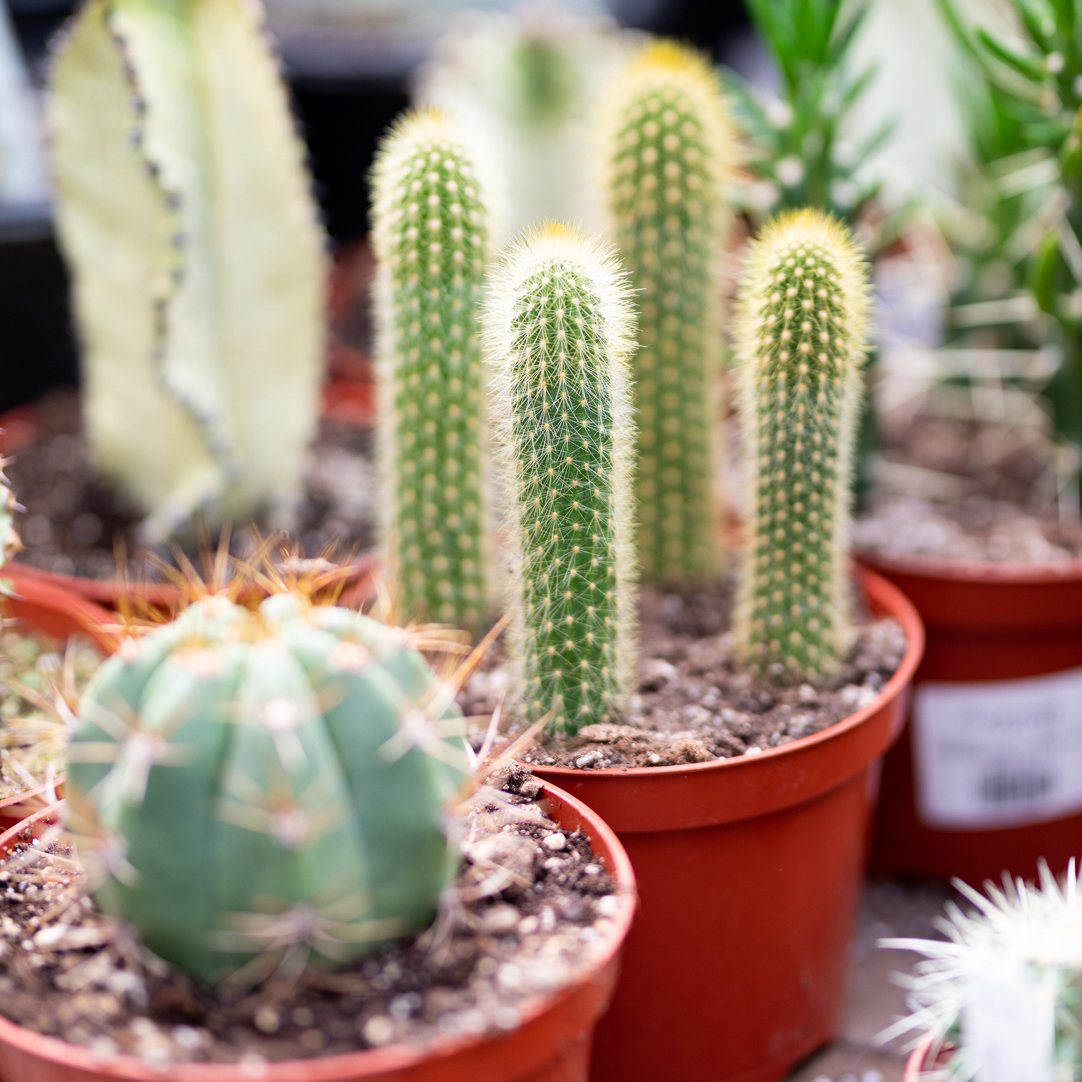 New in the Nursery: Succulents + Cacti