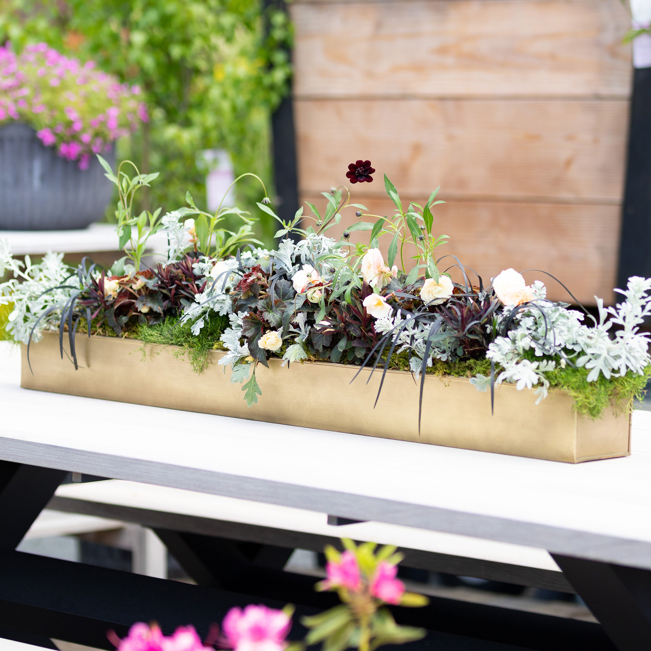 Design by Terrain: Trough Centerpieces for Summer