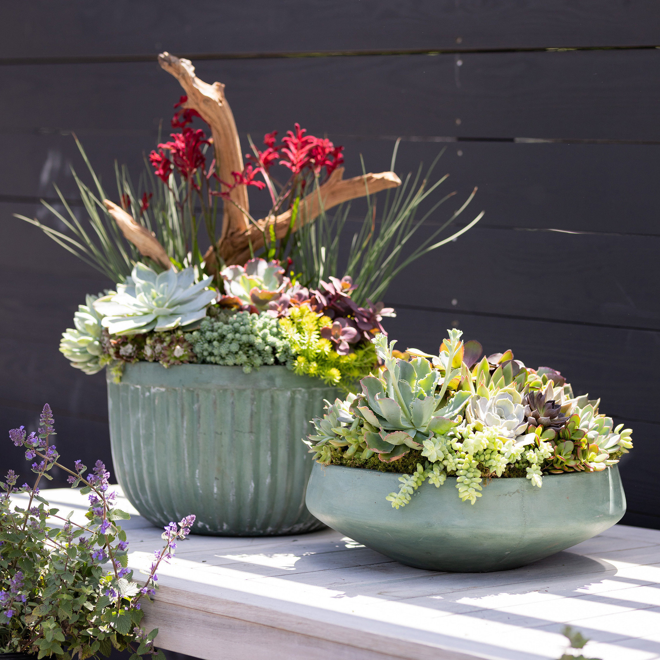 Design by Terrain: Vacation Hardy Planters for Summer