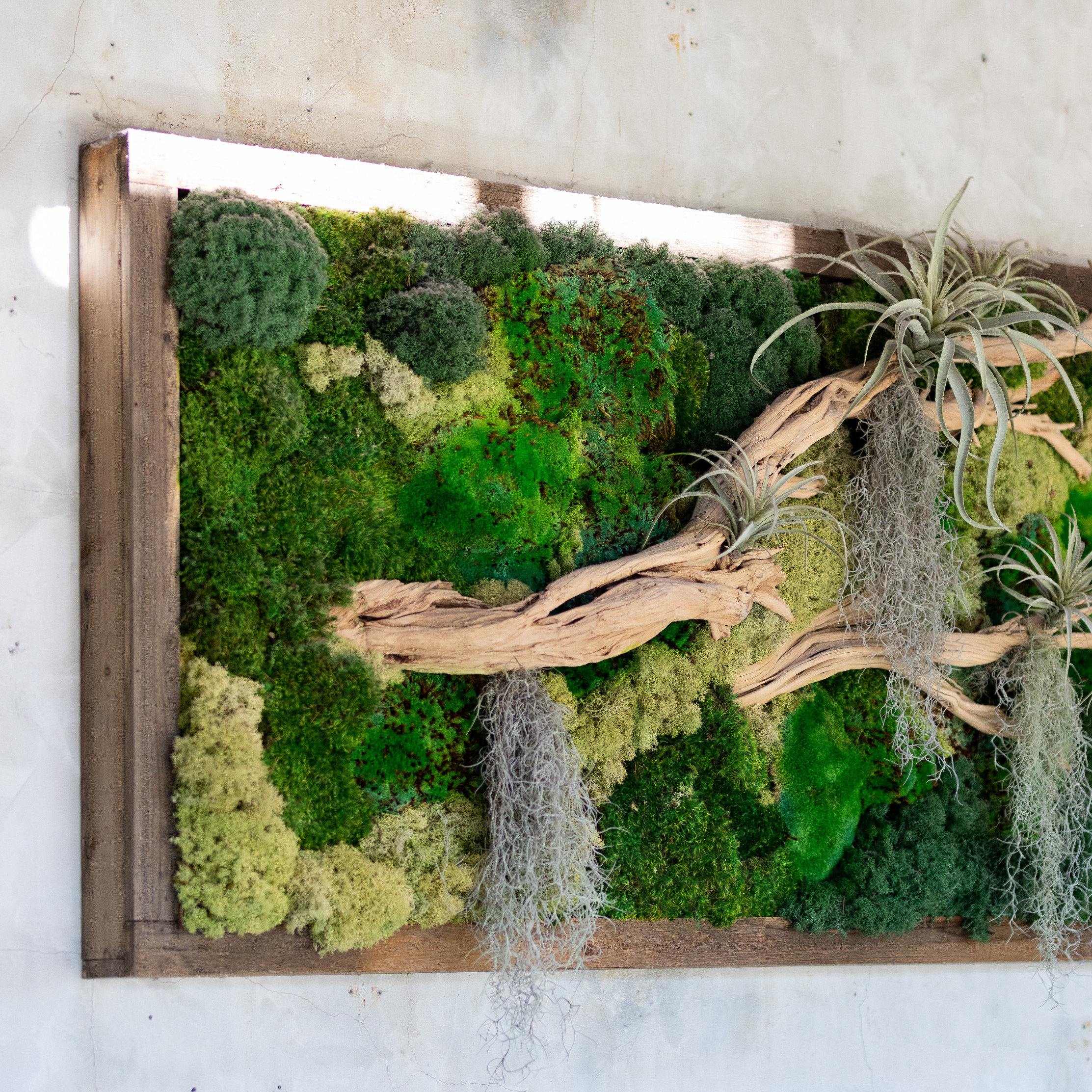 Mini Moss Wall Hangings at Westport