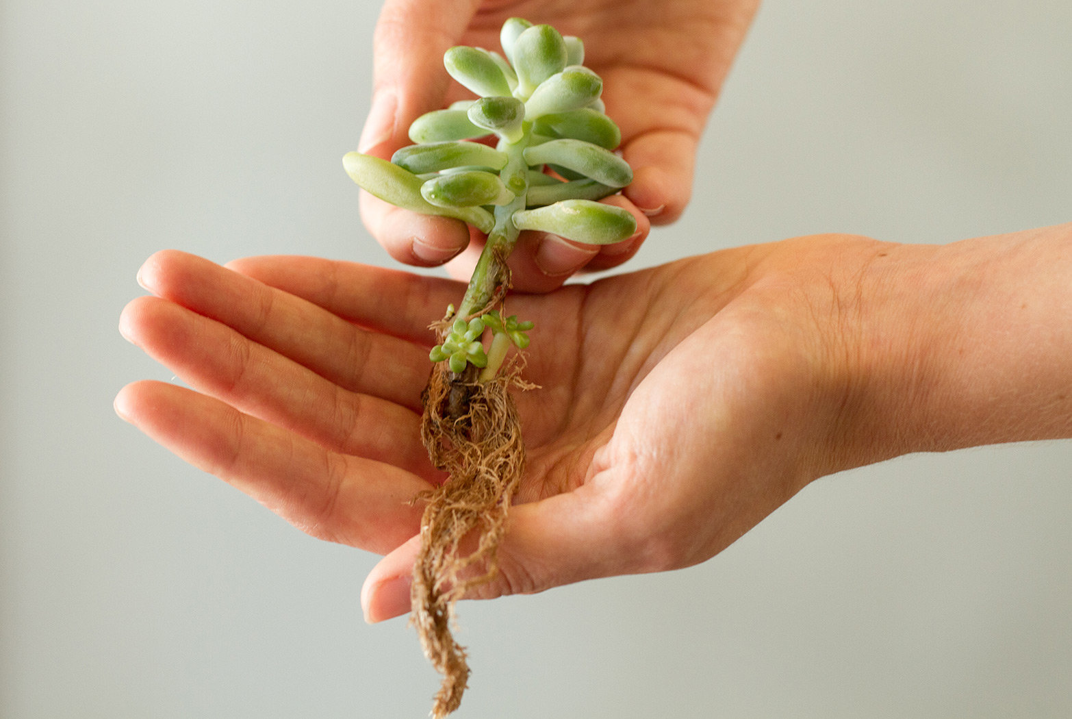 How To Propagating Succulents The Blog At Terrain Terrain