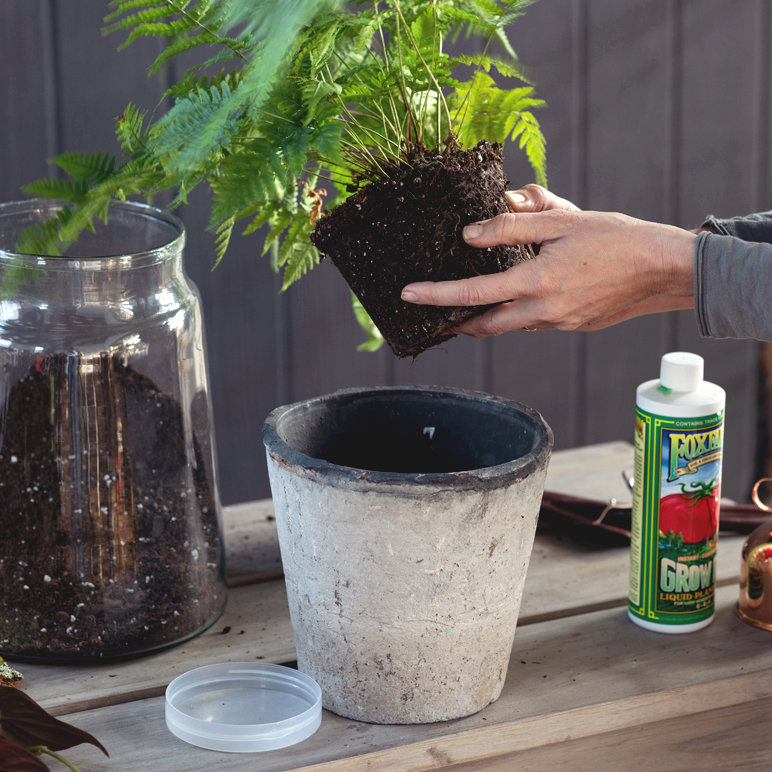 Houseplants 101: Repotting New Plants