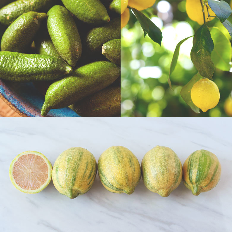 Houseplants 101: Taking Care of Citrus