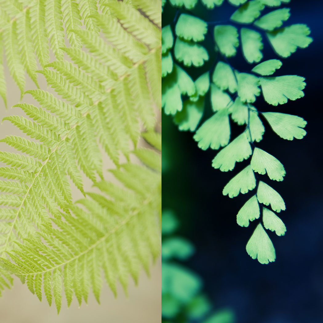Houseplants 101: Taking Care of Ferns