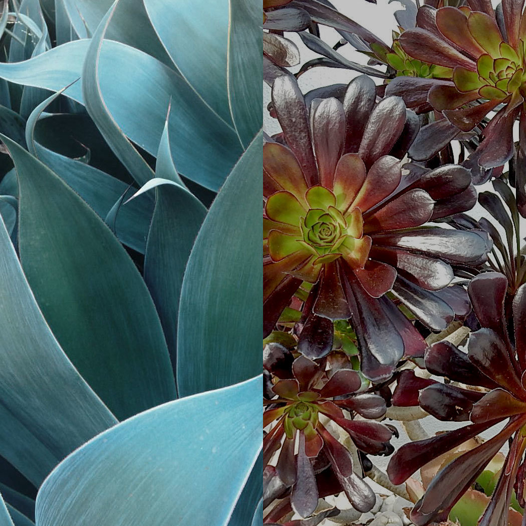 Houseplants 101: Taking Care of Succulents