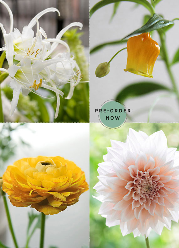 The Spring Bulb Collection | over 50 varieties available for pre-order