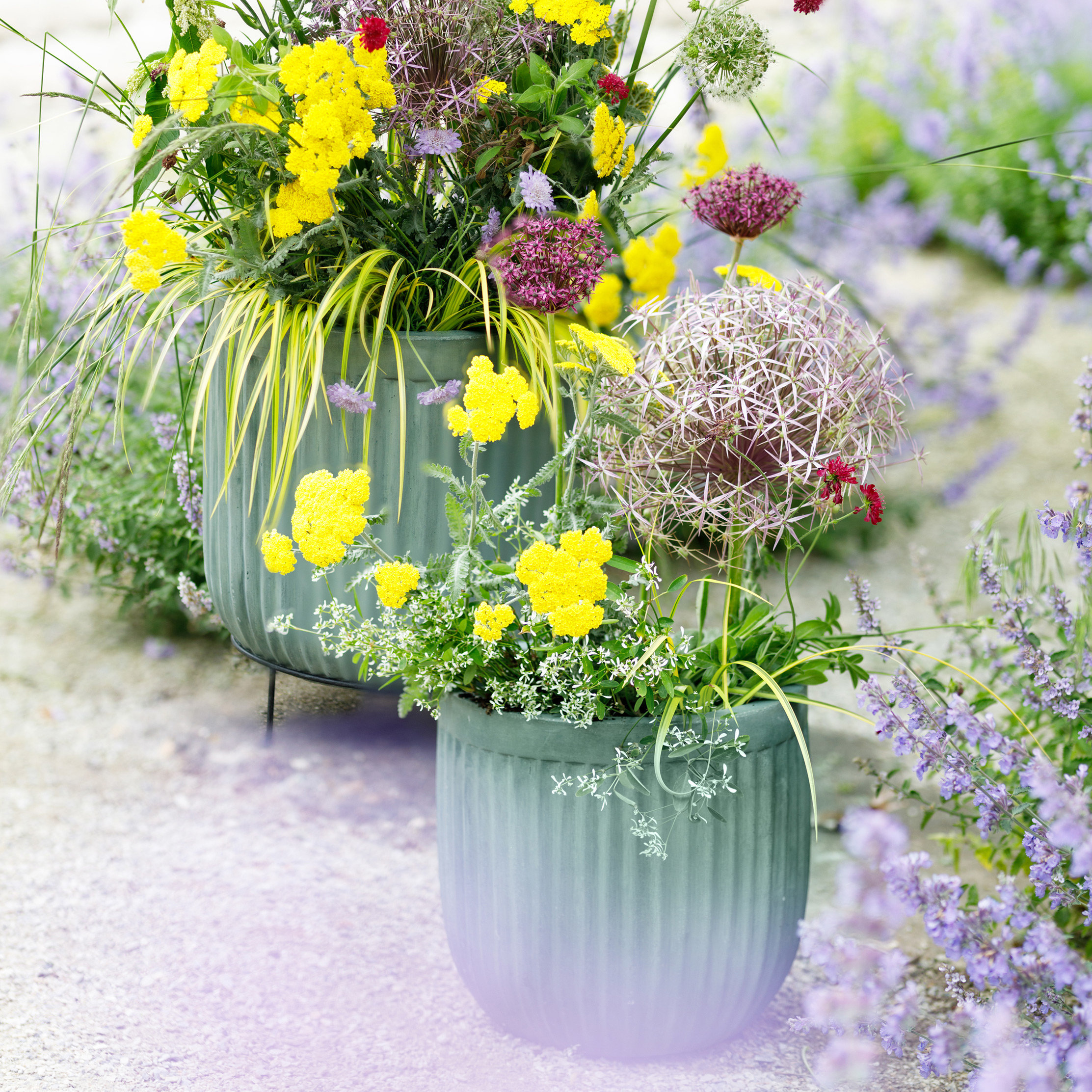 3 Inspired Summer Planter Ideas with our Creative Stylist